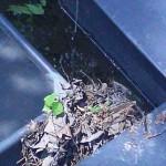 засор водосточного желоба